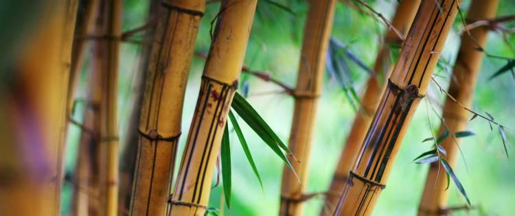 cbth_bamboo