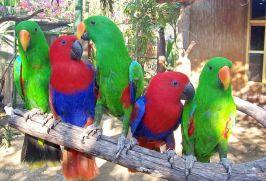 hotel-gili-meno-bird-park-resort-018