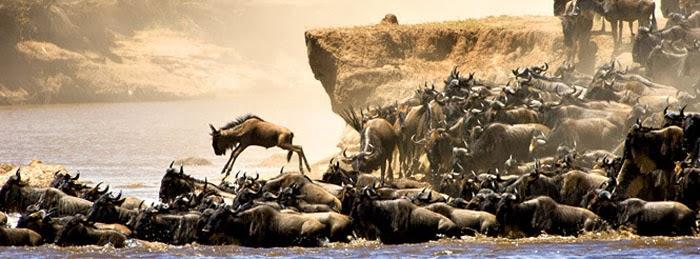 gran-migracion-safari-africa