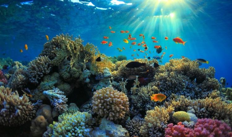 ocean-coral-reef