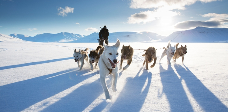 action_photocomp_dog-sled_hr_hr