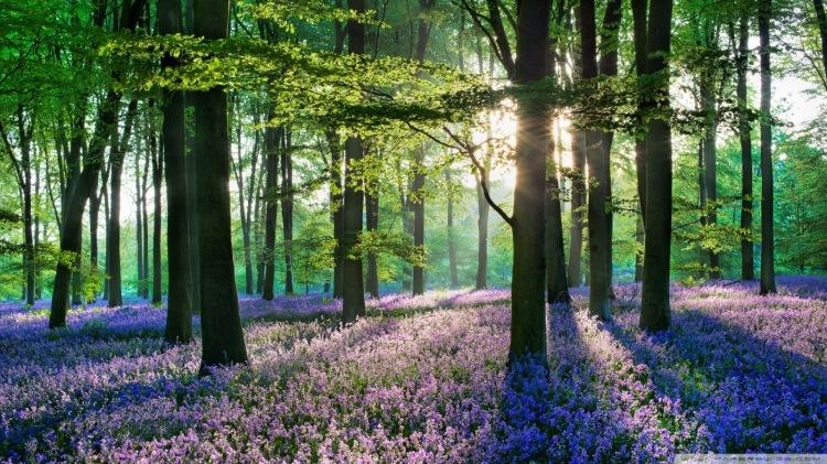 bosque-hallerbos-belgica-espectacular